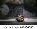Stock photo kittens playing on the cobblestone floor on the street 481634083