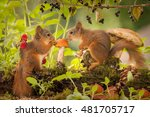young red squirrels watching a... | Shutterstock . vector #481705717