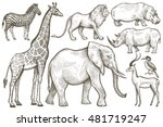 african animals set. elephant ... | Shutterstock .eps vector #481719247