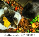 Small photo of two cats male and female get acquainted close up photo