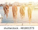 close up of octopus  ... | Shutterstock . vector #481801573