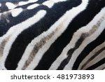 Plains Zebra Print  Equus...