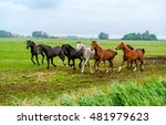 Horse Herd Galloping Across Th...