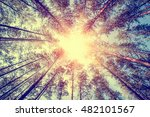 Forest Trees Pine Growth Retro...
