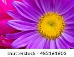 Texture Flower Aster Yellow An...