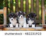 three adorable corgi puppies... | Shutterstock . vector #482231923