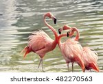 pink flamingos in the water at... | Shutterstock . vector #482270563