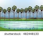Sugar Palm And Swamp Landscape...