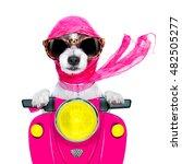 motorcycle diva lady fancy  dog ... | Shutterstock . vector #482505277
