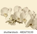 flowering branch of white... | Shutterstock . vector #482673133