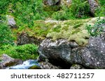 Small Birch Tree Growing On A...