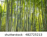 a bamboo forest in kyoto  japan | Shutterstock . vector #482725213