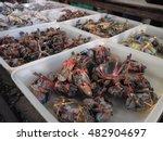 Serrated Mud Crab