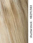rear view of blonde hair | Shutterstock . vector #48291583
