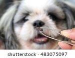 big tick of a dog tweezers to... | Shutterstock . vector #483075097