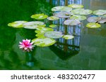 Pink Water Lily On Lilypads...