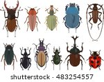 Set Of Different Types Of Bugs...
