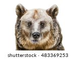 portrait of the brown bear over ... | Shutterstock . vector #483369253