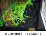 ivy in home decor. | Shutterstock . vector #483420343