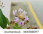 indianian flowers are in full... | Shutterstock . vector #483588097
