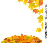 red and yellow maple leaves... | Shutterstock . vector #483630343