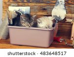 Stock photo two little kittens sleeping together in washbowl with tools for repair 483648517