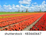 dutch windmill and colorful... | Shutterstock . vector #483660667