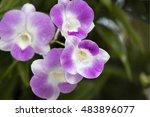 purple orchid flower  | Shutterstock . vector #483896077