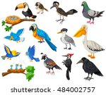 different kinds of birds set... | Shutterstock .eps vector #484002757