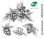 Beer Hops Set Of 4 Hand Drawn...