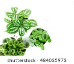 top view of three small plant... | Shutterstock . vector #484035973