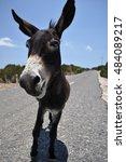 Donkey Of Northern Cyprus....