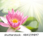 beautiful lotus flower | Shutterstock . vector #484159897