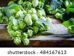 hop cones and twine vine with... | Shutterstock . vector #484167613
