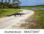 Alligator Crossing
