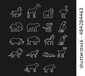 various animal icon. thin line... | Shutterstock .eps vector #484284463