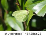 Green Butterfly Camouflaging...