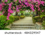 The Beautiful Bougainvillea In...