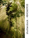 the sun through the trees light | Shutterstock . vector #484360933