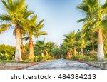 palm alley | Shutterstock . vector #484384213