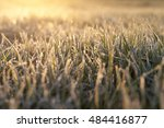photographed close up of young ... | Shutterstock . vector #484416877
