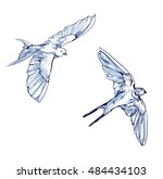 swallow vector  vector... | Shutterstock .eps vector #484434103