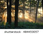 misty sunrise in the forrest | Shutterstock . vector #484453057