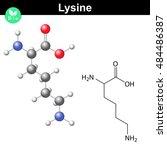 lysine proteinogenic essential... | Shutterstock . vector #484486387