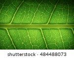 macro leaf texture background
