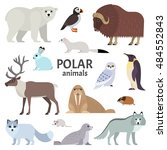 polar animals. vector... | Shutterstock .eps vector #484552843