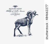 Bighorn Sheep  Wildlife Of...