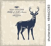White Tailed Deer  Wildlife Of...