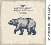 California grizzly, Wildlife of America, illustration, vector, vintage   Shutterstock vector #484662343
