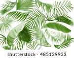 leaf of palm tree background | Shutterstock . vector #485129923